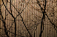 Black branches against a striped building at Werdhölzli Sewage Plant forms a lovely fine art photo.
