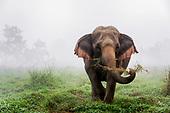 Elephants & Mahouts