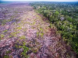 An aerial of the recent fire damage caused by palm oil plantations intentional burning of  Tanjung Puting National Park, Tanjung Puting National Park, Central Kalimantan, Borneo, Indonesia