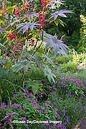65821-00117 Castor Oil Plant (Ricinus communis), Summer Snapdragon (Angelonia Serena Purple), Pentas (Pentas lanceolata 'Graffiti Violet'), Chinese Silver Grass (Miscanthus sinensis 'Morning Light') in Terrace Garden,  Sarah P. Duke Gardens, Durham, NC