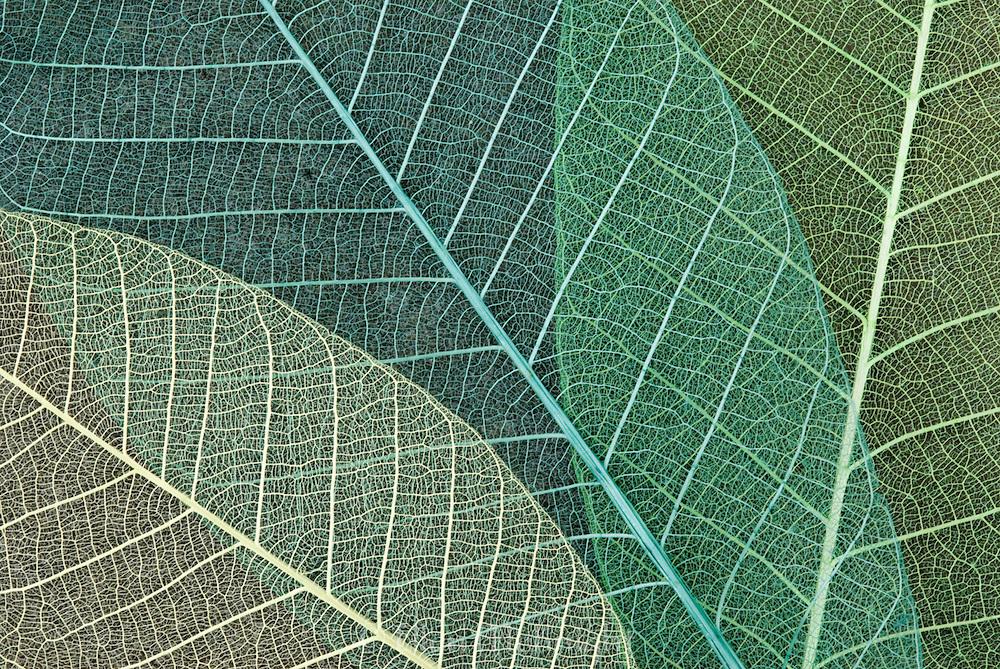 Overlapping Skeleton Leaves