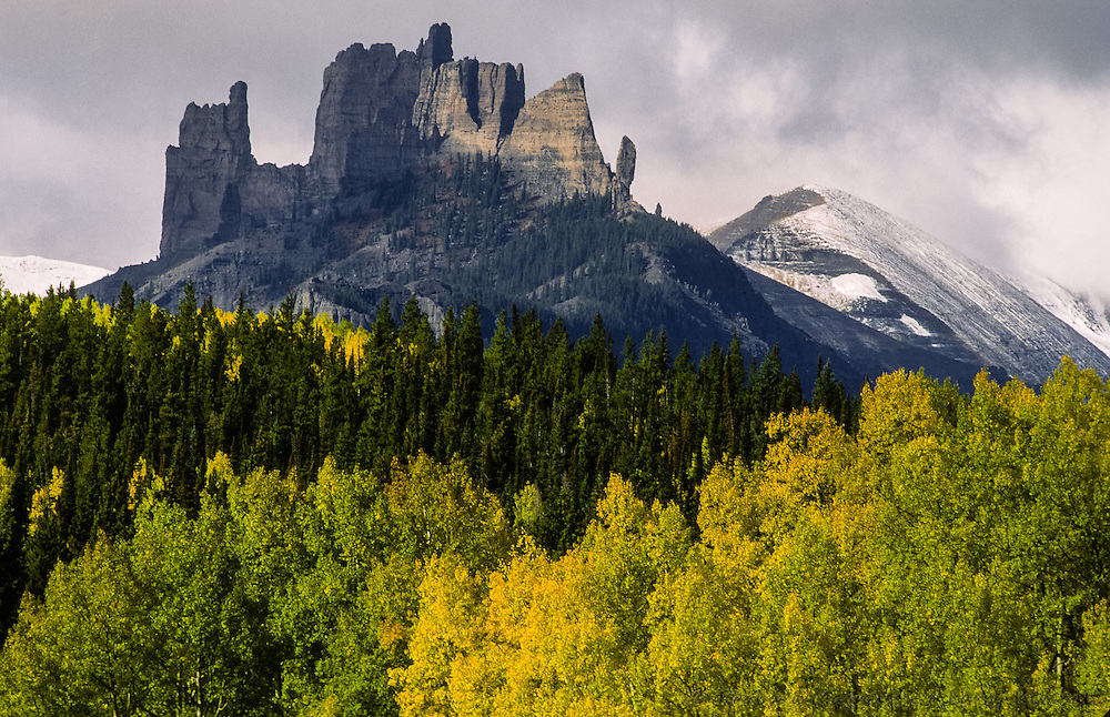 Castle Mountain with fresh snow looms over autumn aspens; West Elk Wilderness, Gunnison National Forest, Ohio Pass, Colorado