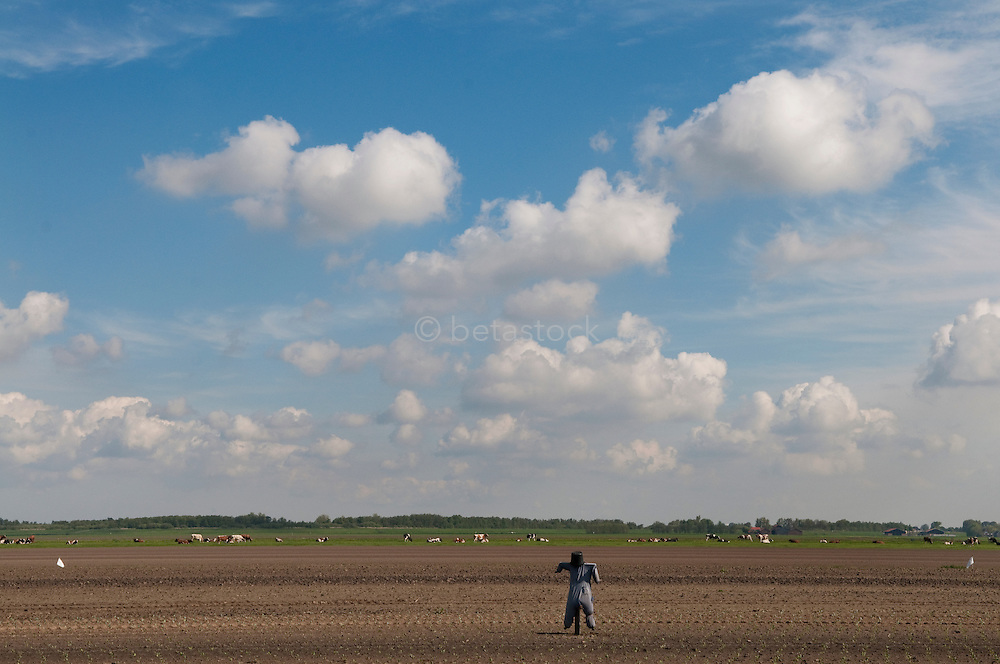 polder met vogelverschrikker. Dutch farmland with a scarecrow.