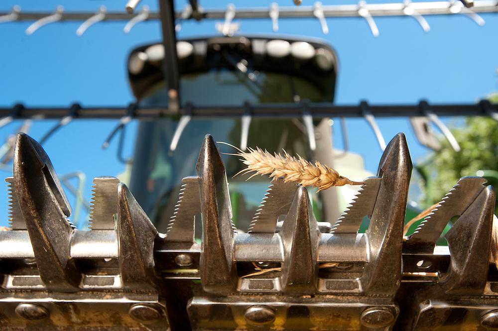 Combine for harvesting grain