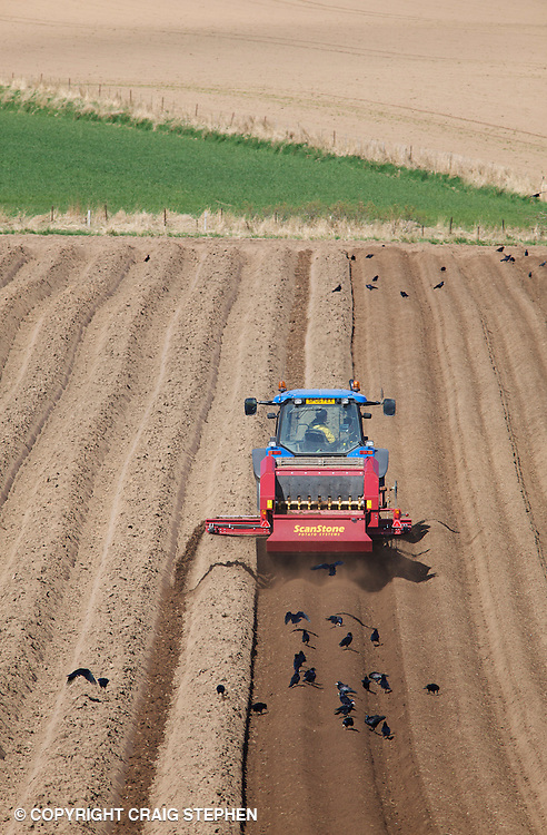 Stone and clod separating prior to planting potatoes in Perthshire, Scotland