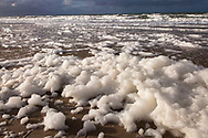 Europa, Niederlande, Zeeland, durch das Absterben von Algenblueten verursachter Schaum am Strand zwischen Oostkapelle und Domburg auf Walcheren.<br />
