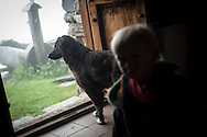 Kea, the dog, looks outside, as it rains. Village of Brontallo (Switzerland) July 02, 2014. Beñat and Nathalie spend two months (July and August) on Spulüi, at 1.900 meters, taking care of goats and making cheese. Their children Kemen (7 years old) and Oihu (18 months) are with them. (Gari Garaialde / Bostok Photo)