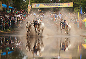 Ox Race, An Giang, Vietnam