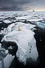 Svalbard #13 2011
