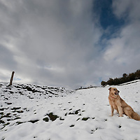 A Basque shepherd dog plays in a snowed hill in the Northern Spanish Basque village of Okondo, on December 2010. Photo Rafa Rivas