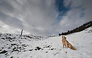 A Basque shepherd dog plays in a snowed hill in the Northern Spanish Basque village of Okondo, on December 2010. Photo Rafa Rivas