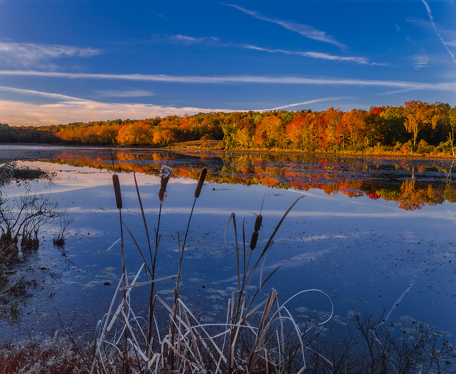 Cattails & reflections of fall color, North Running Brook Pond, Woodstock, CT