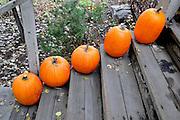 USA, Idaho, McCall, Pumpkins on Steps (typical autumn harvest or Halloween display)