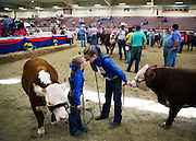 Sisters Hanna Stehr, 7, left, and Kiera, 11, of Magnum Oak., hangout between showings of their miniature Herefords in the Five Points Bank Arena during the Nebraska State Fair in Grand Island.