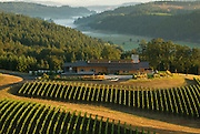 Aerial view over Penner-Ash winery & estate vineyard, Yamhill-Carlton AVA, Willamette Valley, Oregon