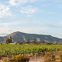 Viñas del Valle del Maipo y Pique, Ubicado en las cercanías de Santiago, el Valle del Maipo ofrece una tierra prodigiosa, para el cultivo de la uva. Vineyards of Valle del Maipo and Pique, Located near Santiago, the Maipo Valley offers a prodigious land for the cultivation of grapes.