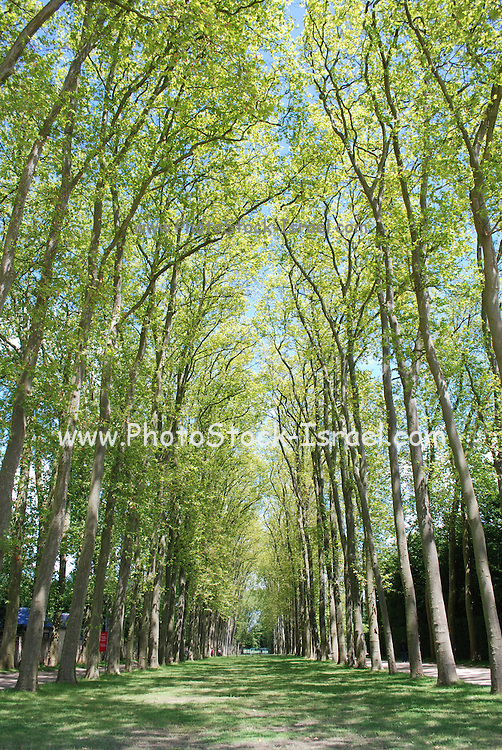 France, Versailles, The Gardens of the palace of Versailles