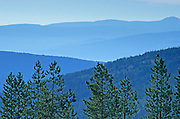 Pines and mountains near Kelowna<br /> Kelowna<br /> British Columbia<br /> Canada