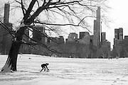 Central Park, New York, January 2015. Photograph © 2015 Darren Carroll