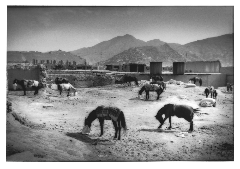 Horses boarded in compound in the old city of Kabul, Afghanistan.