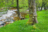 The River Nevis, Glen Nevis Scotland