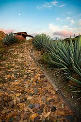 """Agave Walkway"" -This sunset, moon, agave plant, and walkway were photographed at Parador San Sebastian, Mexico."