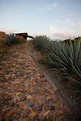 """Agave Walkway"" -This sunset, moon, agave plant, and walkway were photographed at Parador San Sebastian, Mexico."