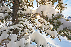 Boreal forest in winter