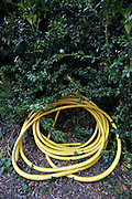 rolled up garden water hose laying on the ground halve hiding under a green bush