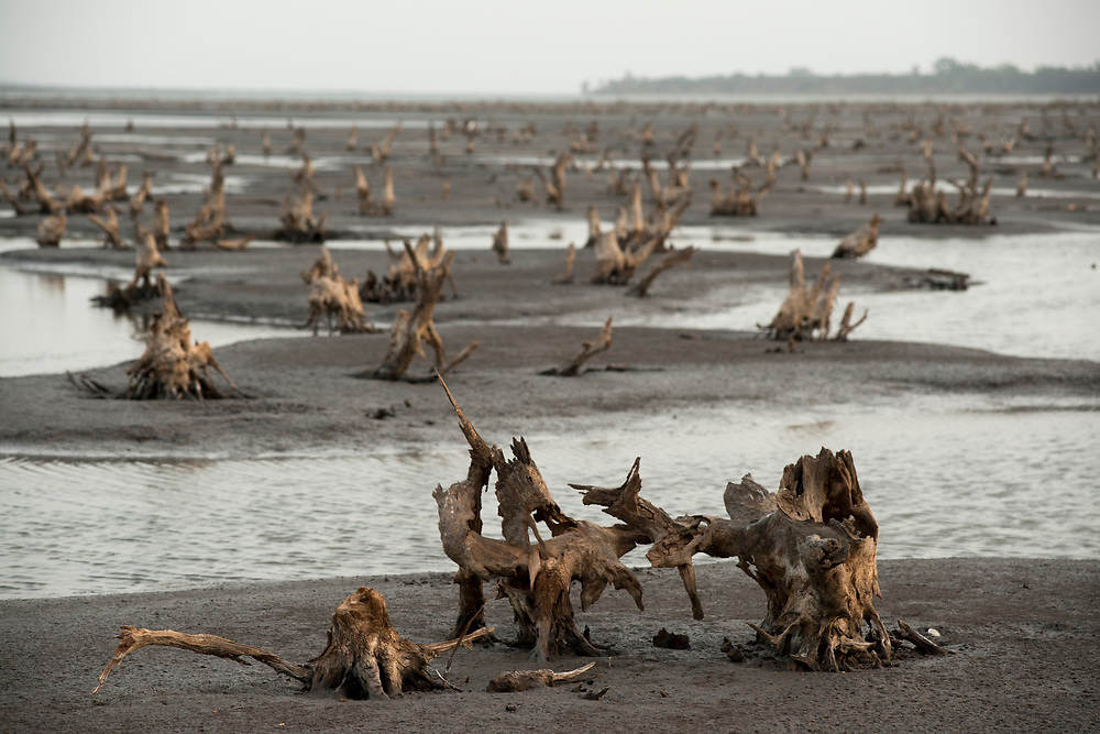 "The skeletal remains of hundreds of mangrove trees mark barren flats along the Soungrougrou River where dense mangroves once flourished. West Africa is home to one of the world's most important mangrove forests, however large areas of the forests have been dying off in recent years. Locals and experts believe that drought and rising sea levels due to climate change have caused the increased salinization of the unique mangrove ecosystem leading to the degradation of large swaths of mangrove forests with detrimental consequences on biodiversity, fish stocks and the livelihoods of local inhabitants. Mangrove forests are excellent carbon sinks and essential in the fight against global warming. According to a recent report by the UNEP, the world's mangroves are being destroyed at a rate three to five times faster than global deforestation. The report calls mangrove forests ""one of the most threatened ecosystems on the planet."" Marsassoum, Casamance, Senegal. 16/04/2016."