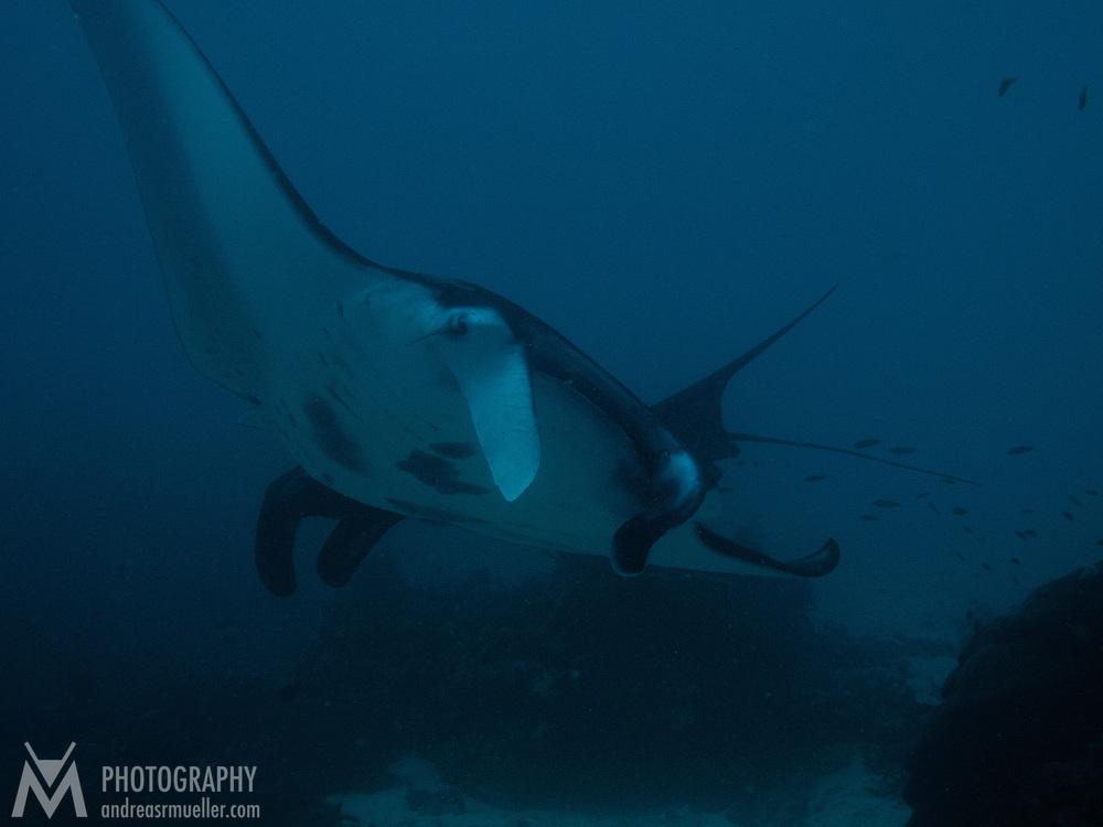 Dive Spot: Manta Sandy