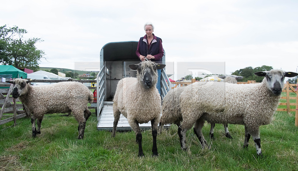 © Licensed to London News Pictures. <br /> 13/08/2014. <br /> <br /> Danby, North Yorkshire, United Kingdom<br /> <br /> A woman unloads her Blue Faced Leicester sheep at the start of the Danby Agricultural Show in North Yorkshire. <br /> <br /> This year is the 154th show which was founded in 1848. It is the oldest agricultural show in the area and offers sheep dog trials, judging of a variety of different animals such as cattle, sheep, ferrets, horses and rabbits along with different classes of horticulture and dairy. <br /> <br /> Photo credit : Ian Forsyth/LNP