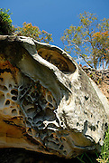 Rock formation. Royal Botanic Gardens, Sydney, Australia