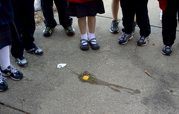 Kindergarteners from St. Francis Xavier Elementary in Vicksburg, Miss. look at an egg that fell out of its protective casing on Friday Jan. 28, 2011 during the class Egg Drop. The students designed a protective case for an egg at home and formed an hypothesis of wether it would break. The case was then thrown from the roof of the school. Students then analyzed the egg, corrected their hypothesis, and even used the data to create a graph for math class.
