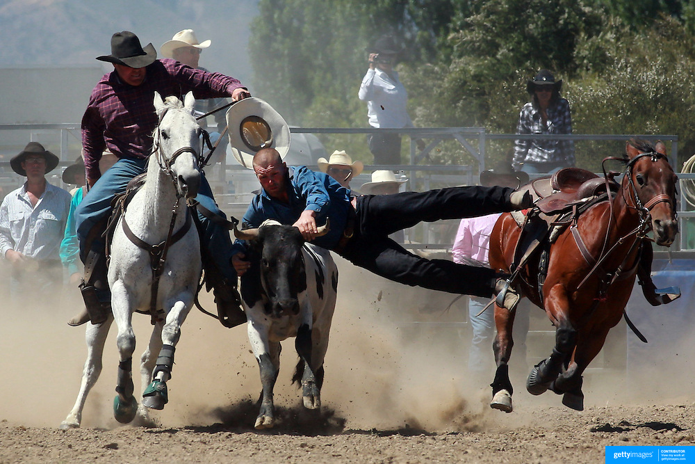Clint Robinson from Owaka in action during the Open Steer Wrestling competition at the Wanaka Rodeo. Wanaka, South Island, New Zealand. 2nd January 2012