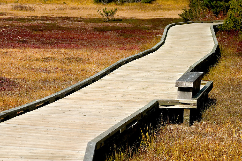 Wooden walkway in Paradise Meadows, Strathcona Park Vancouver Island BC