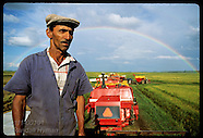 01: RICE FARM SHARECROPPERS