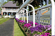 Flowers provide colour to the Parade Ring edging with the Weighing Room behind during the first day of the Dante Festival at York Racecourse, York, United Kingdom on 15 May 2019.