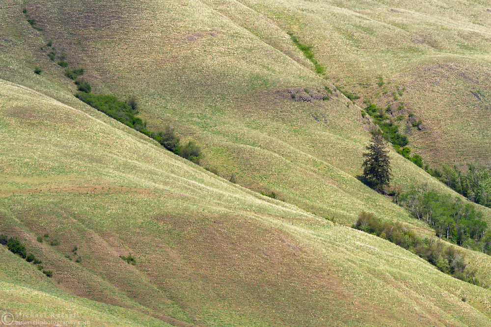 Pasture on the side of Vernon Mountain in Coldstream, British Columbia, Canada