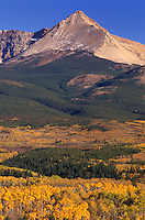 Aspen parkland (Populus tremuloides) in autumn, Glacier National Park Montana USA