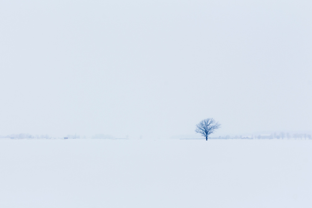 Lonely Tree standing after a snow storm on the road to Lake Huron, ON