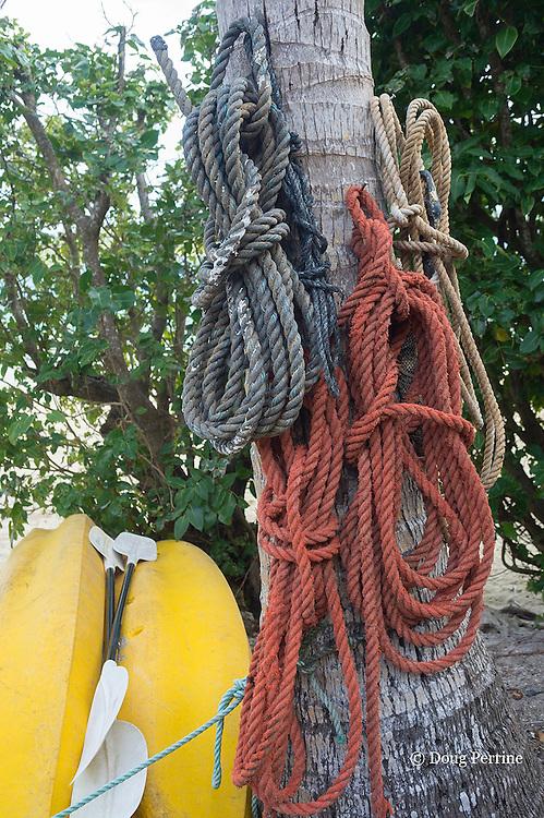 lines hanging coconut palm in front of Ika Lahi Fishing Lodge, Hunga Island, Vava'u, Kingdom of Tonga, South Pacific