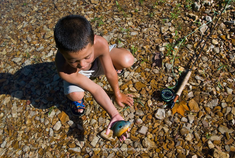 d_38022. A six-year-old fly fisher admires a longear sunfish he caught on the James River, Missouri.