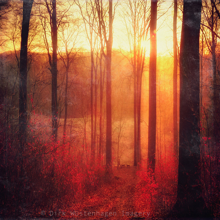 Sunrise on a hazy winter morning in a beech tree forest with a person walking two dogs - texturized photograph<br />