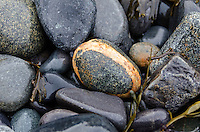Striped beach stone wet with rain in Compass Harbor, Acadia National Park, Maine.