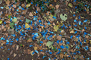 Wedding confetti litter waste merges with dead leaves after a ceremony or party in Holland Park, on 28th June 2020, in London, England.
