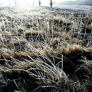 A morning frost swept over prairie grass near Saylorville Lake near Des Moines, Ia.   Foggy, frosty mornings  melted into unseasonaly warm December afternoons in the winter of 2006.