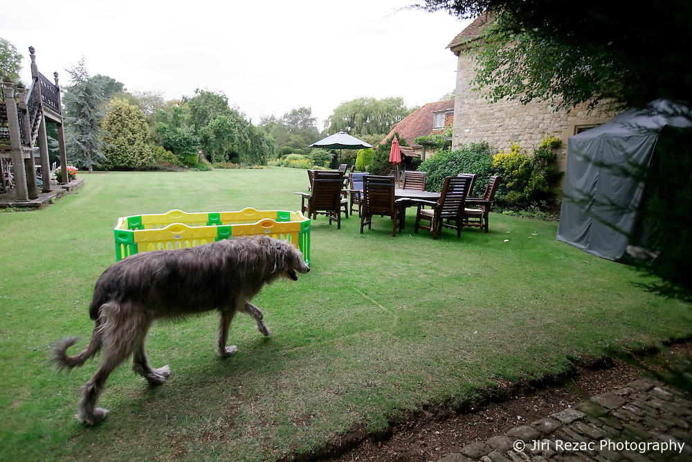 UK ENGLAND THAME 27AUG14 - 'Missy', an Irish Wolfhound of Bee Gee Robin Gibb paces through the garden at her home in Thame, Oxfordshire.<br /> <br /> jre/Photo by Jiri Rezac<br /> <br /> &Acirc;&copy; Jiri Rezac 2014