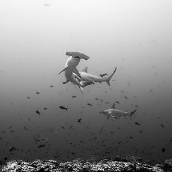 Cocos Island, Dive Spot: Punta Maria