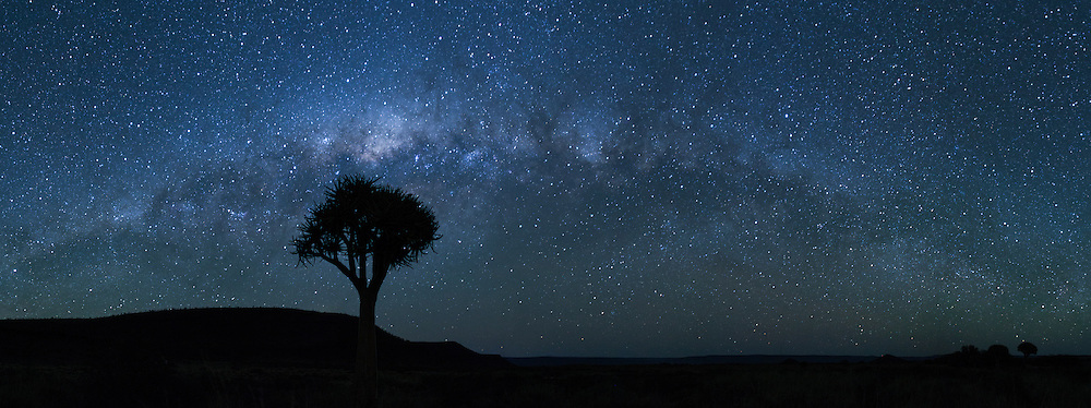 Quiver tree under a milky way night panorama.